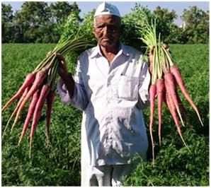 Madhuvan Gajar A High Nutritious Carrot Variety Developed By A